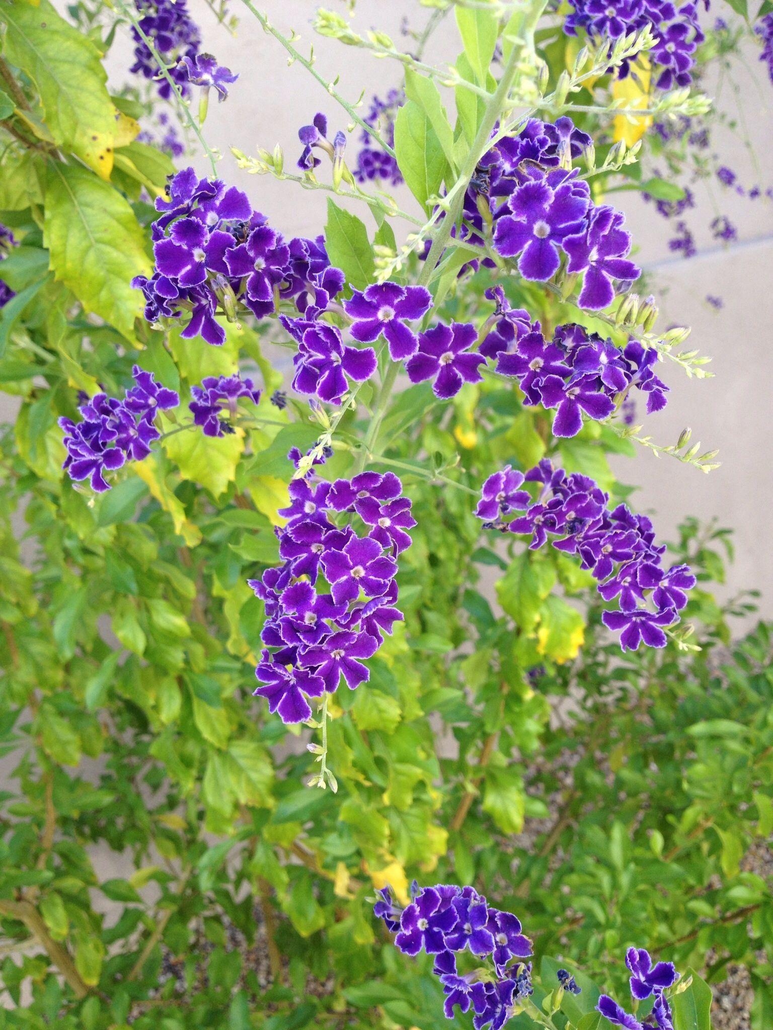 Arizona blooms plants bloom arizona