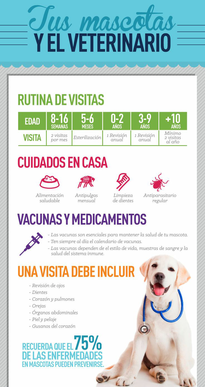 Calendario Perruno.De Los 0 A Los 9 Anos Tu Perro Debe Ir Al Veterinario Por