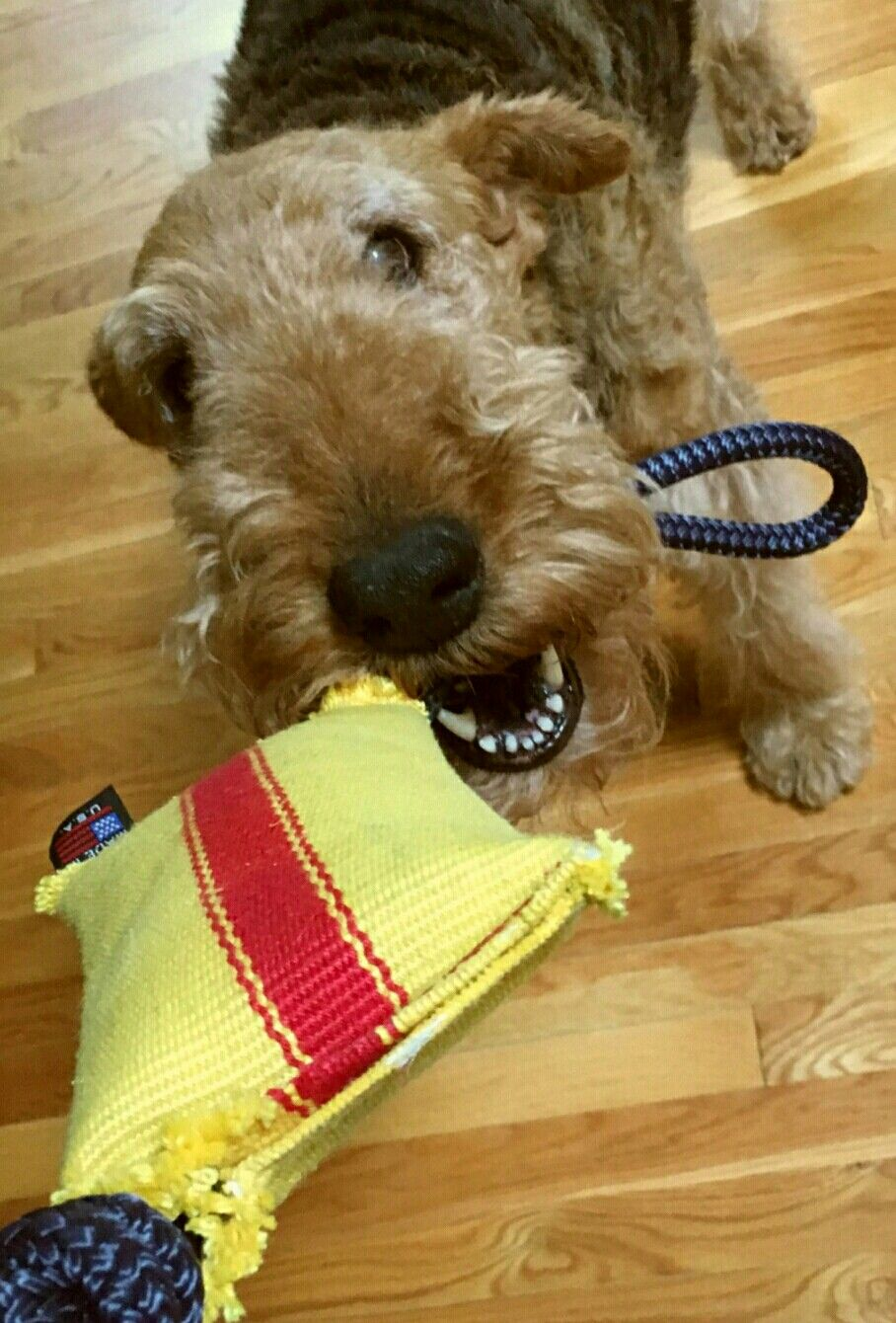 Tug And Go The Better Made Firehose Dog Toy Dog Toys