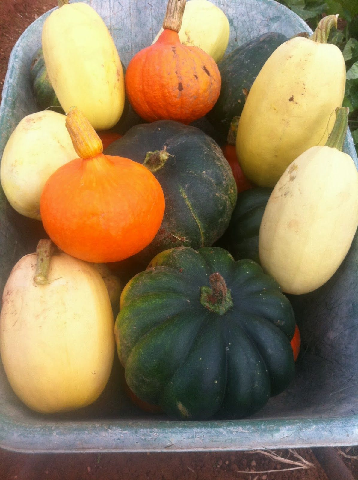 What to do with those squashes and gourds? Squashes