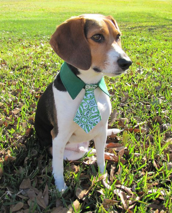 Dog Cat Green Pointed Shirt Collar W Celtic By Bluebeagleboutique