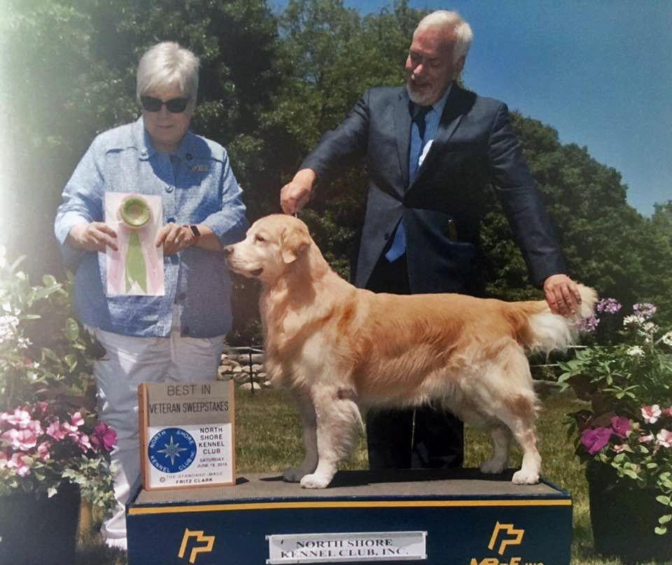 Yankee Golden Retriever Club Best In Veteran Sweepstakes Dogs