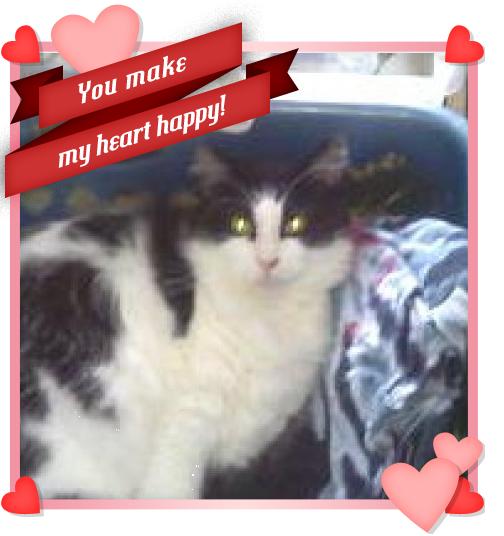 Cat Adoption Near Me Craigslist - WAYANGPETS.COM