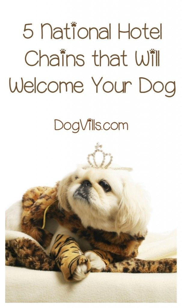 What Are The Best Pet Friendly Hotel Chains With Images Dog Friendly Vacation Dog Friendly Hotels Pet Friendly Hotels