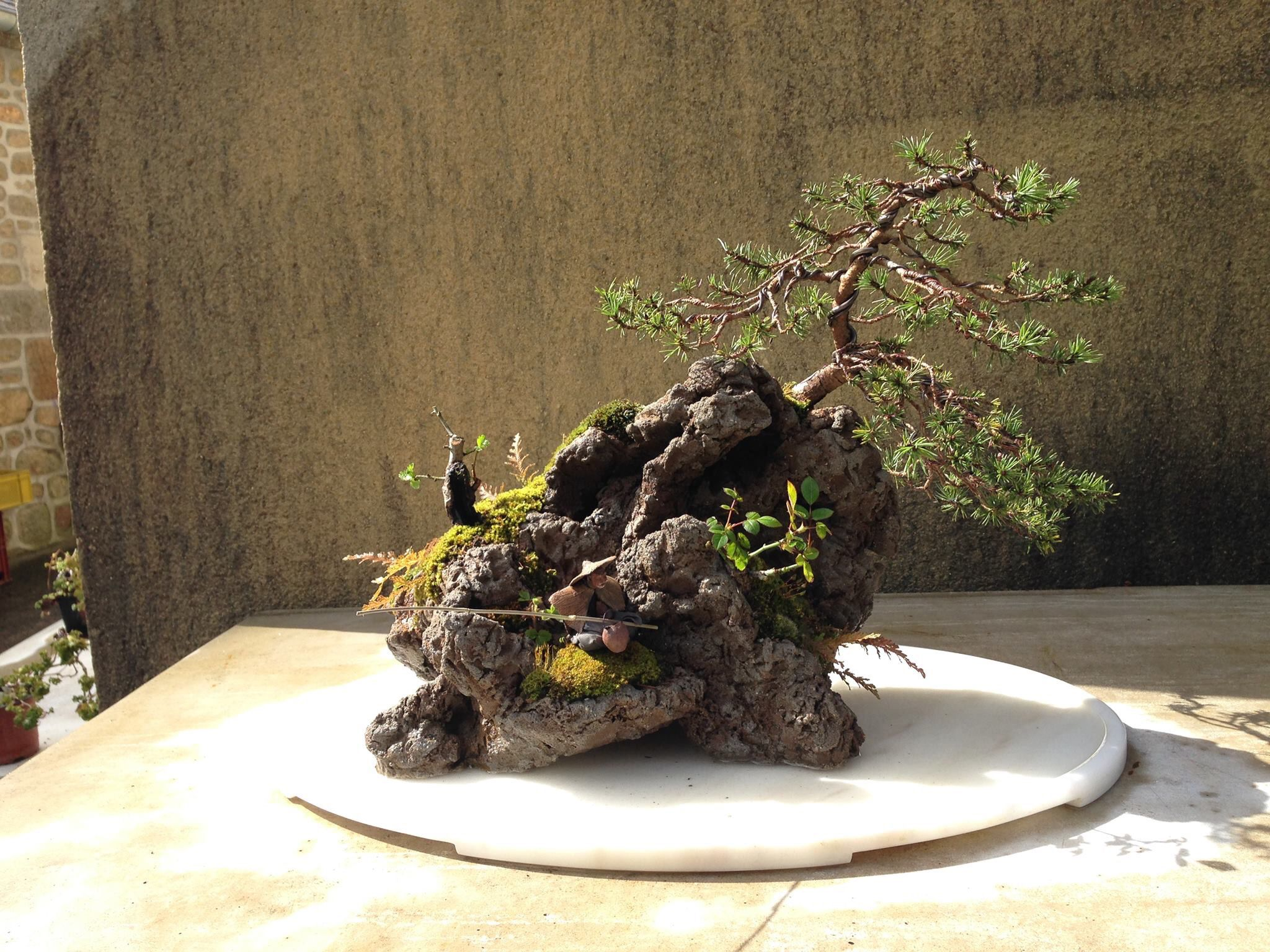 Pin By Les Compagnons Du Bonsai On Styles Japonais Pinterest Wiring Yew Trees Plants