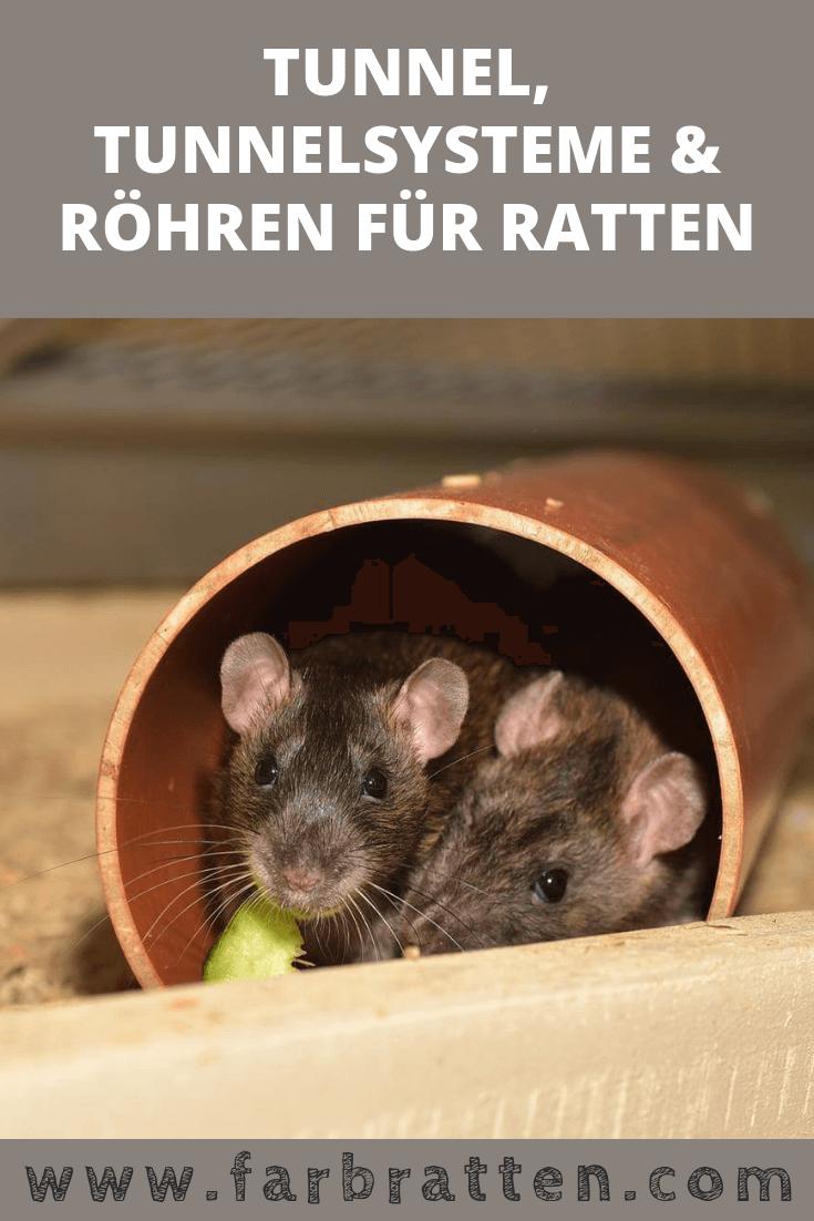 Ratten Tunnel Tunnelsysteme Und Rohren Zur Beschaftigung Hausratten Farbratten Ratten Bilder