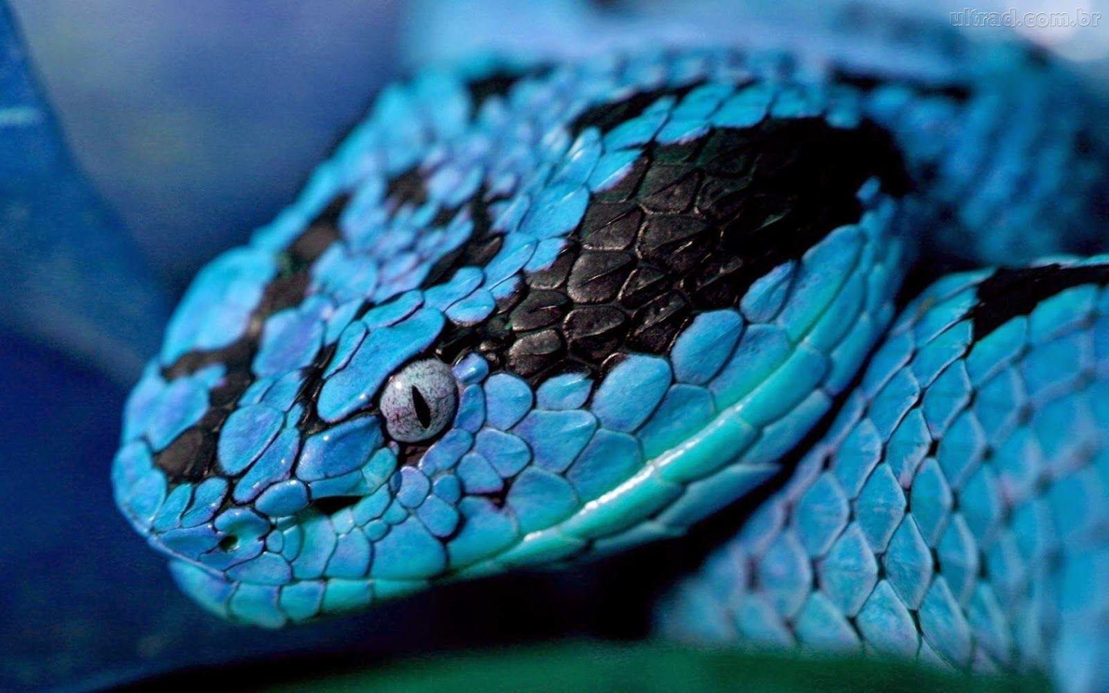 Pin Von Chumani On Tree Auf Snakes Bunte Schlangen Schone Schlangen Schlangenbilder