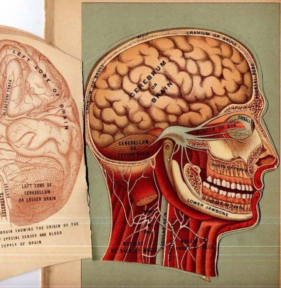 Picture Of Good Health Human Head Anatomy Four by SurrenderDorothy