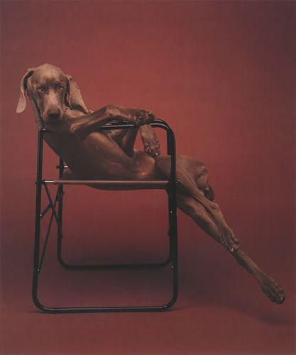 William Wegman : Fashion Photographs: Ingrid Sisch, William 58
