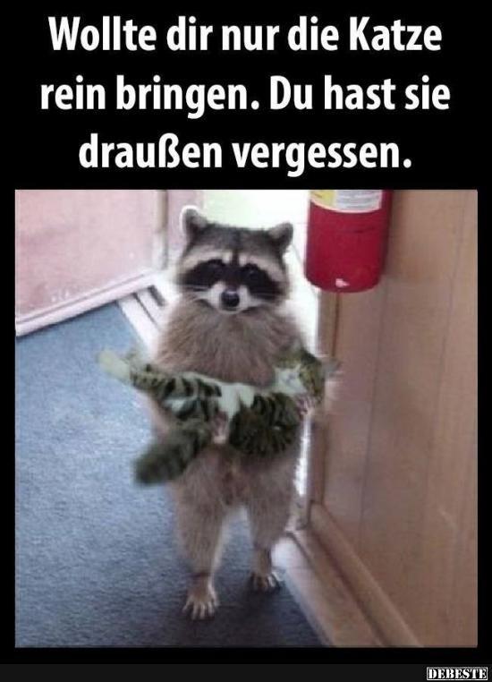 Besten Bilder, Videos und Sprüche und es kommen täglich neue lustige Facebook Bilder auf DEBESTE.DE. Hier werden täglich Witze und Sprüche gepostet! #animalesbebébonitos