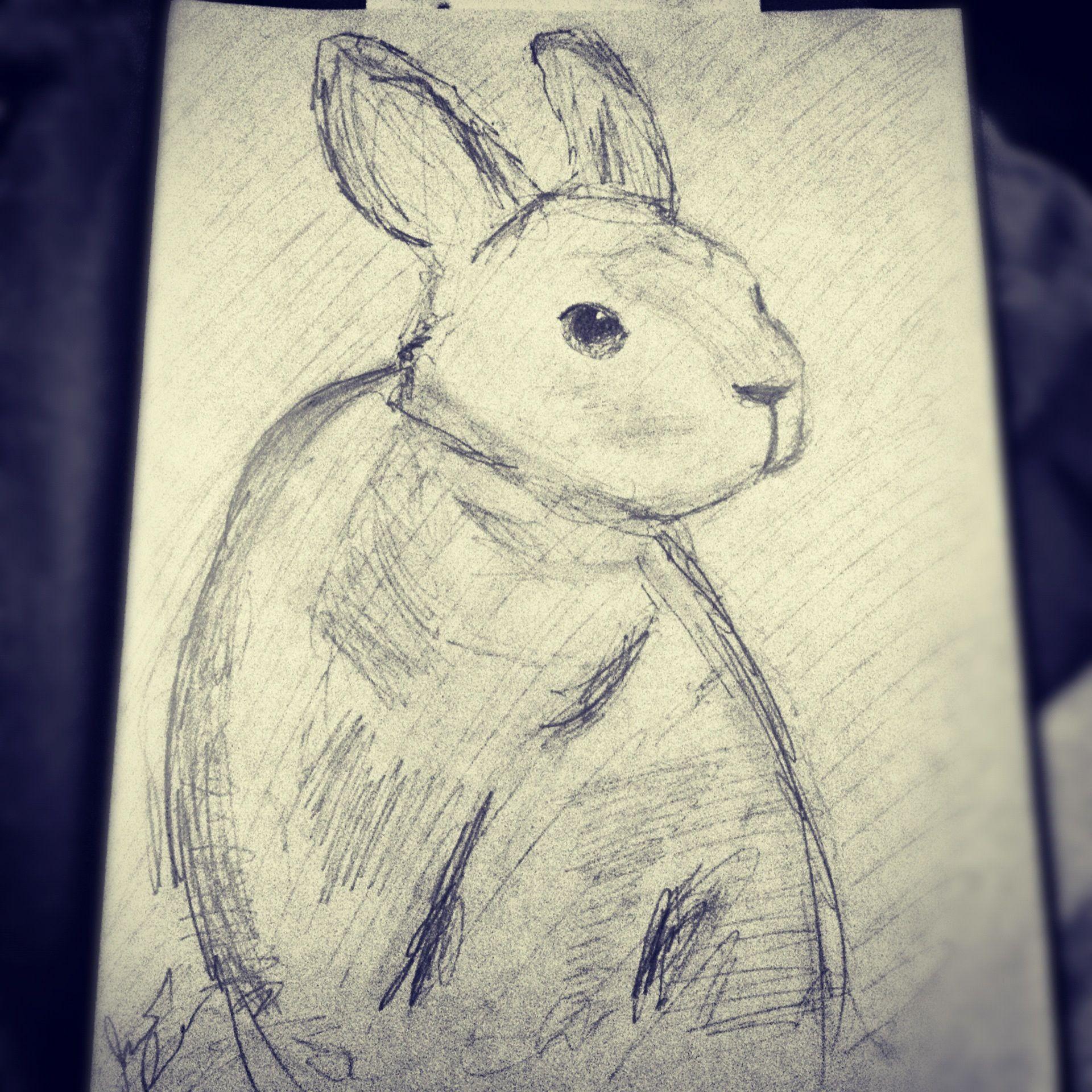 rabbit sketch done by jonathan plummer rabbits pinterest