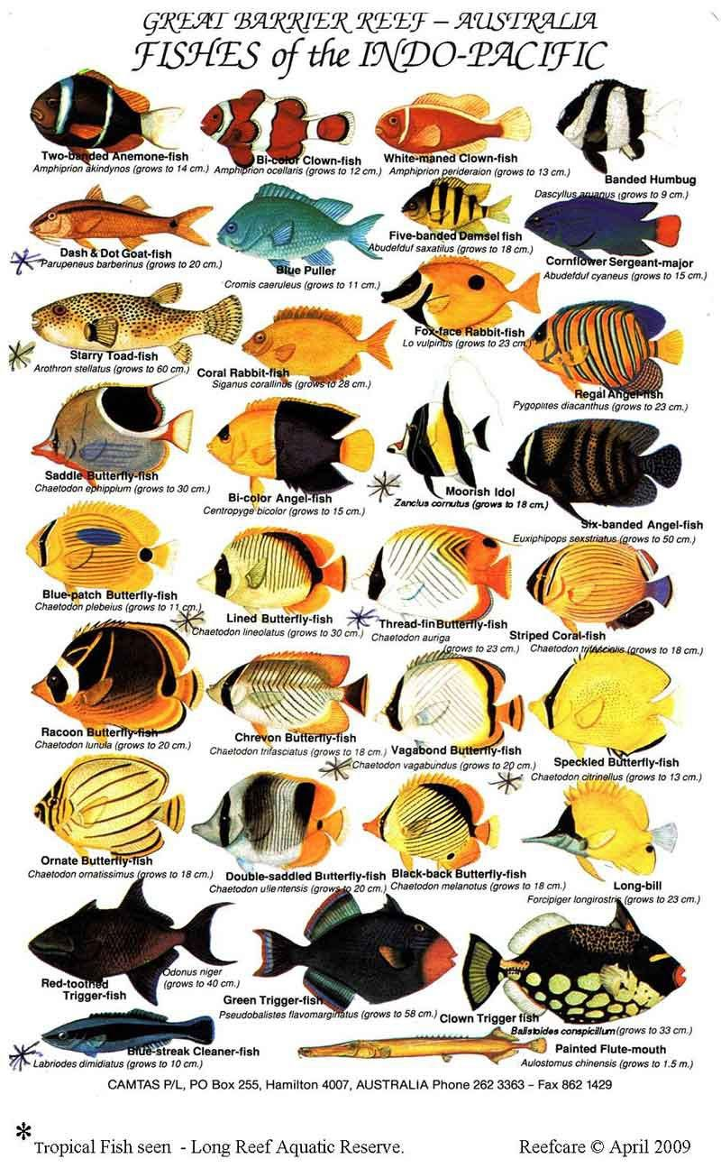 Saltwater Aquarium Fish Chart