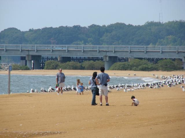 Sandy Point State Park Is The Closest Beach To Washington Dc Area
