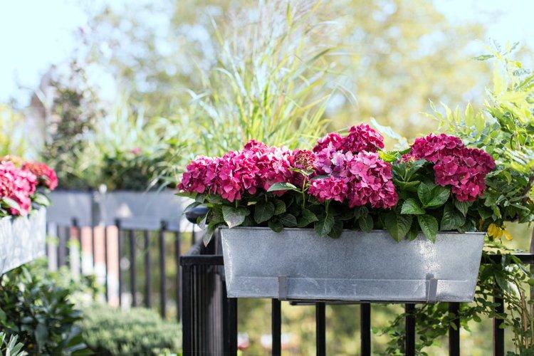 Blumenkasten Bepflanzen So Herrscht Fruhling Auf Dem Balkon In 2020 Blumenkasten Bepflanzen Beliebte Blumen Balkon Blumen