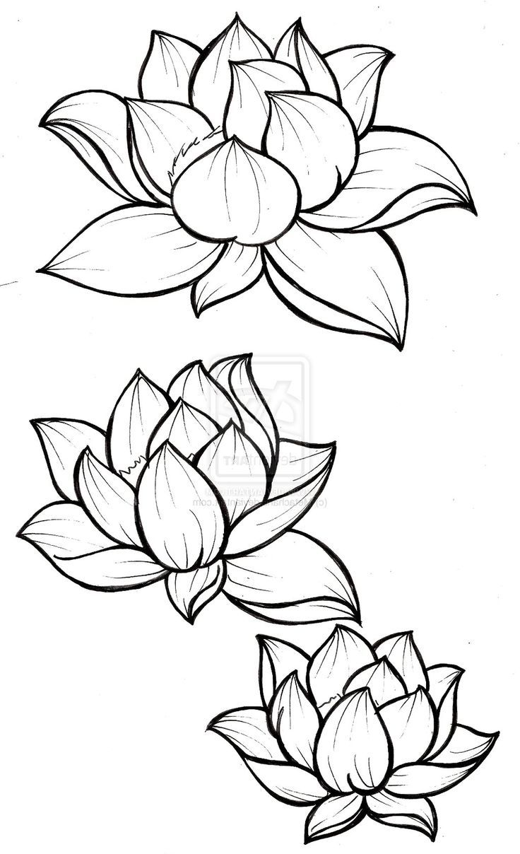 736x1208 Drawing Of Lotus Flower With Leaf How To Draw A