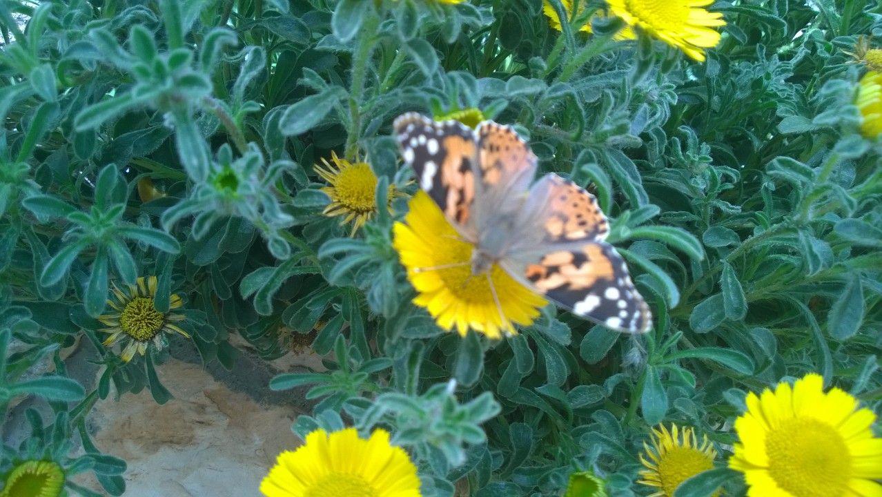 Pin by majd tafish on My garden Plants, Garden