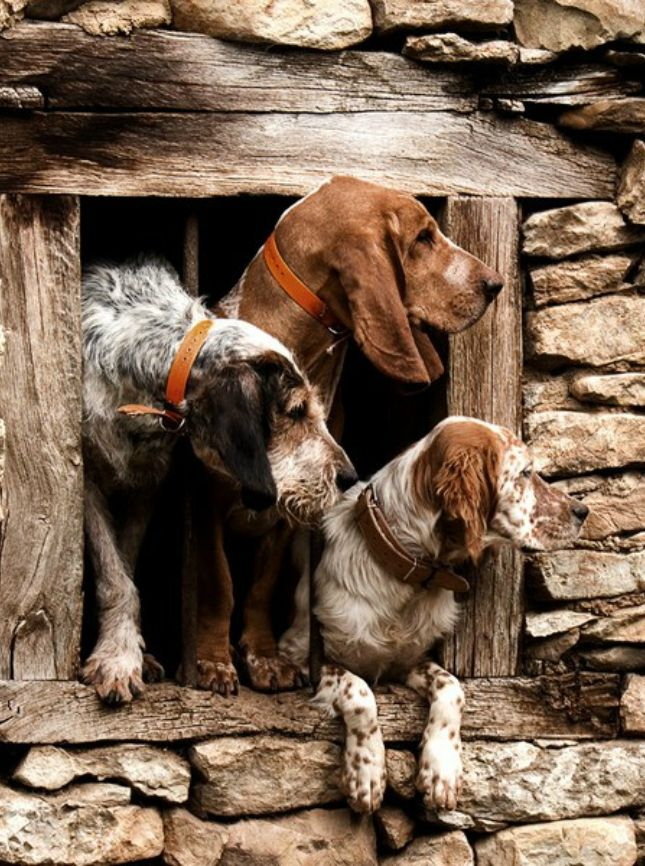In The Moment : Photo | Dogs, Farm dogs, Animals