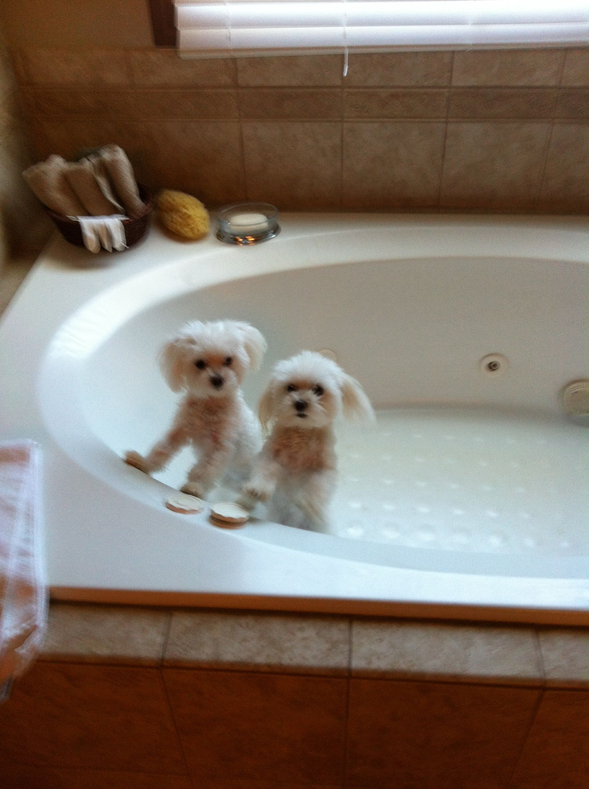Gigi Jojo Together Taking A Bath Not The Happiest Obviously
