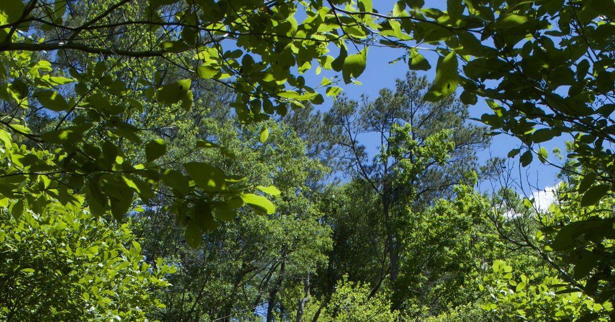 Foto Keren Pemandangan Alam Gambar Pemandangan Pohon Air Alam Jalan Rumput Download Tempat Paling Keren Nikmati Pemandangan Alam Di Malang In 2020 Plants Grapes