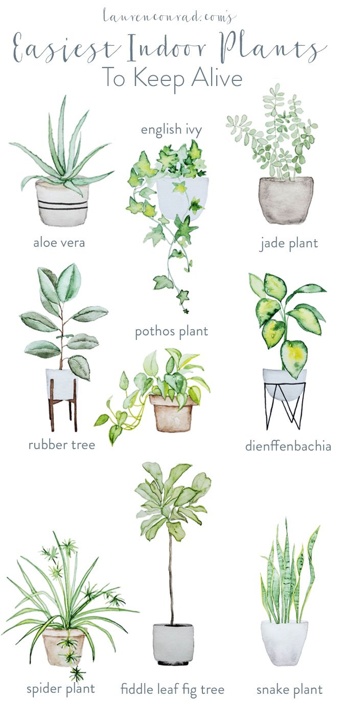 Tips on keeping indoor plants alive home pinterest plants