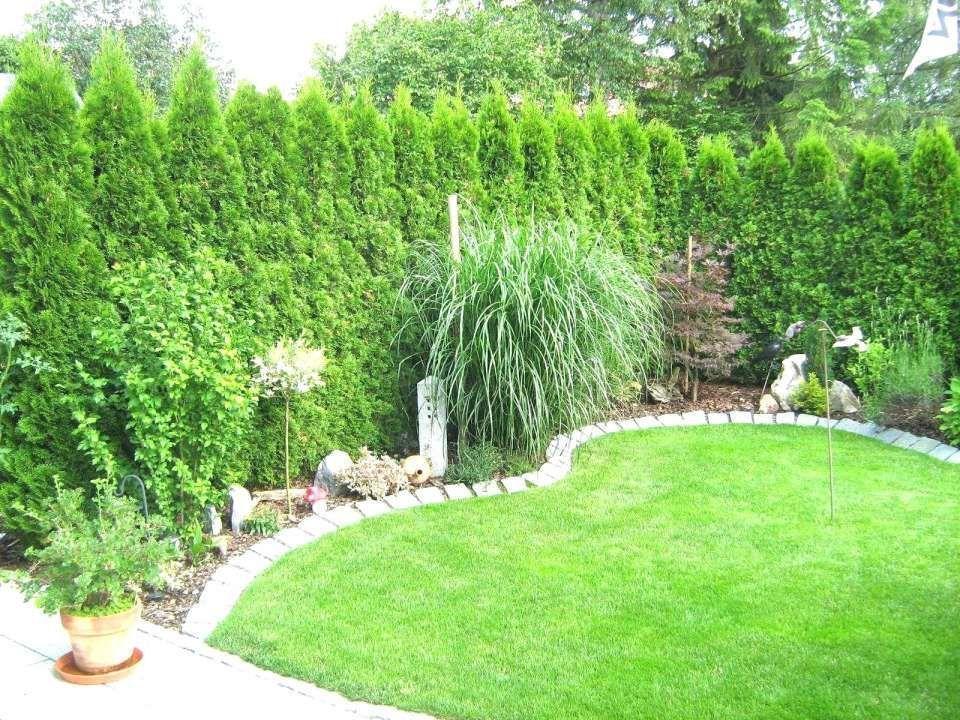 Garten Pflanzen Sichtschutz 10 Sichtschutz Pflanzen Garten 10 Sichtschutz Pflanzen Garten 10 Sichtsc Garten Landschaftsbau Garten Landschaftsbau