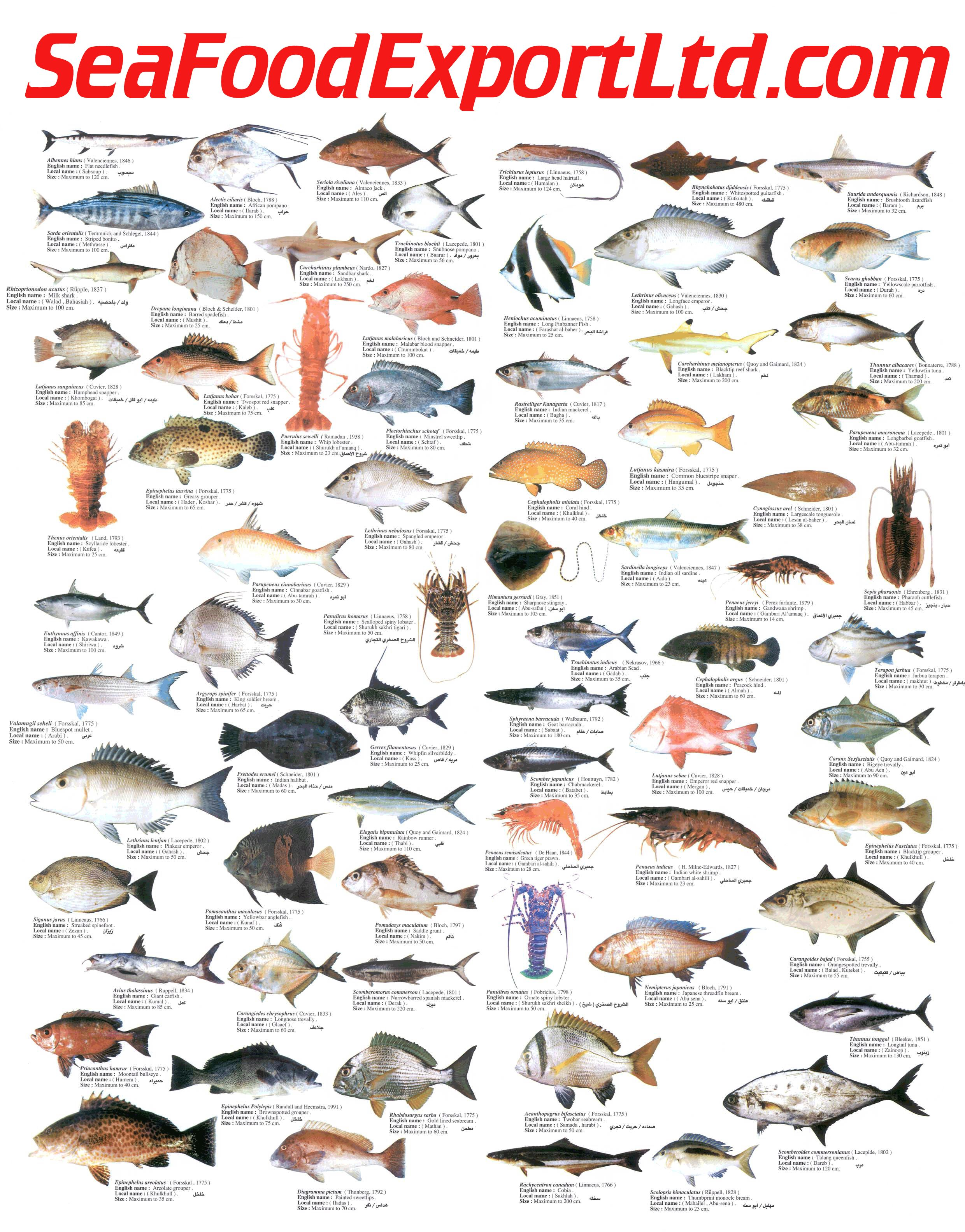 Seafood chart for Animals that are included in the cuisine of seafood