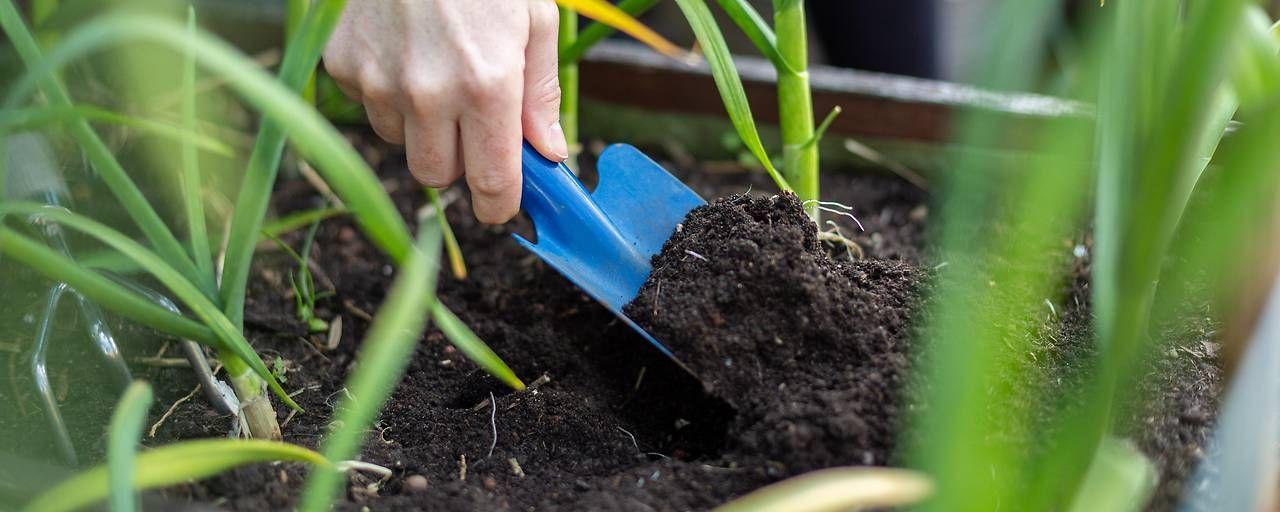 Bio Ist Auch In Garten Und Blumenkistln Trend Und Das Nicht Nur Bei Mitteln Gegen Ungeziefer Bei Erd Biologische Landwirtschaft Stickstoffdunger Gemuseanbau