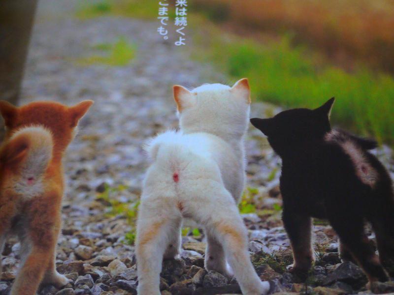coz I'm SHIBA / シバだもの。 Japanese Shiba Inu Dog Funny & Cute Face Photo Book in Japan