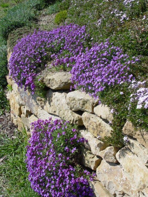 Steinmauer bewachsen - Google-Suche Puutarha Pinterest Garten