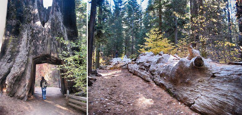 EUA / Yosemite: um parque para gigantes   Viagens à Solta