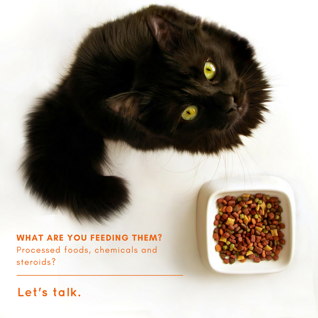What are you feeding your cat and dog? Chemicals, steroids
