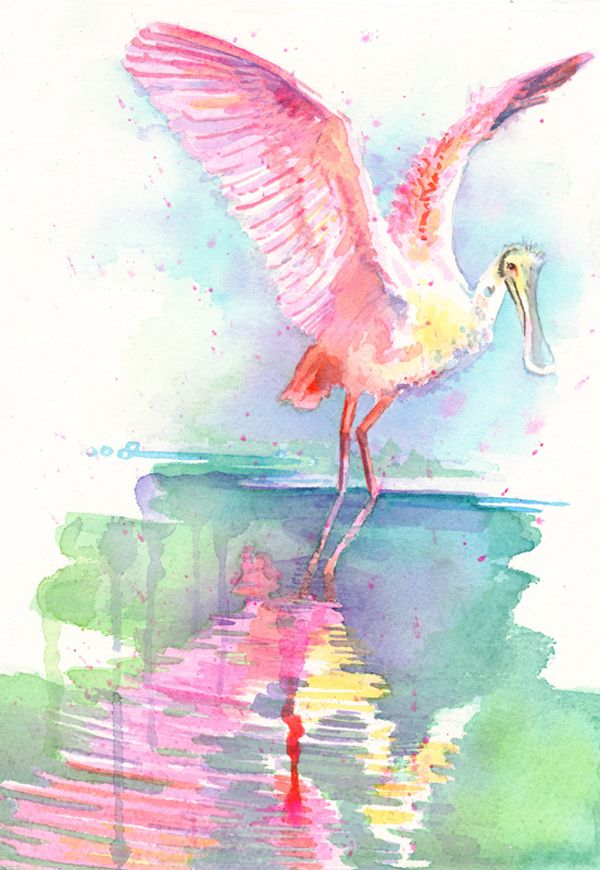 Confetti Spoonbill Watercolor Roseate Spoonbills Were Once Hunted