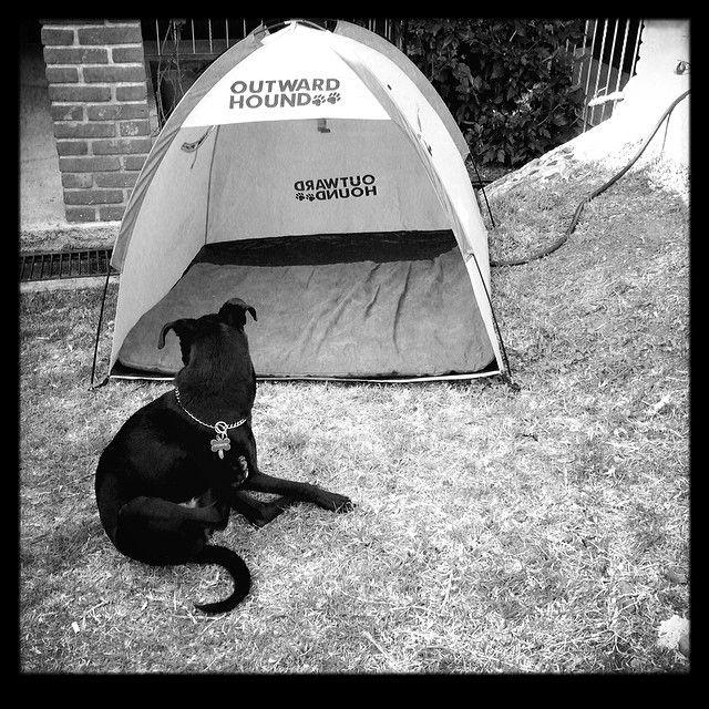 Con su casa de campaña para perros #juegacontuperro