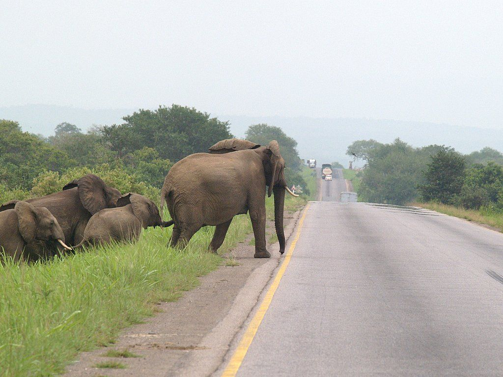 What to do About Animals in the Path of Your Jeep - Assume there are other animals nearby