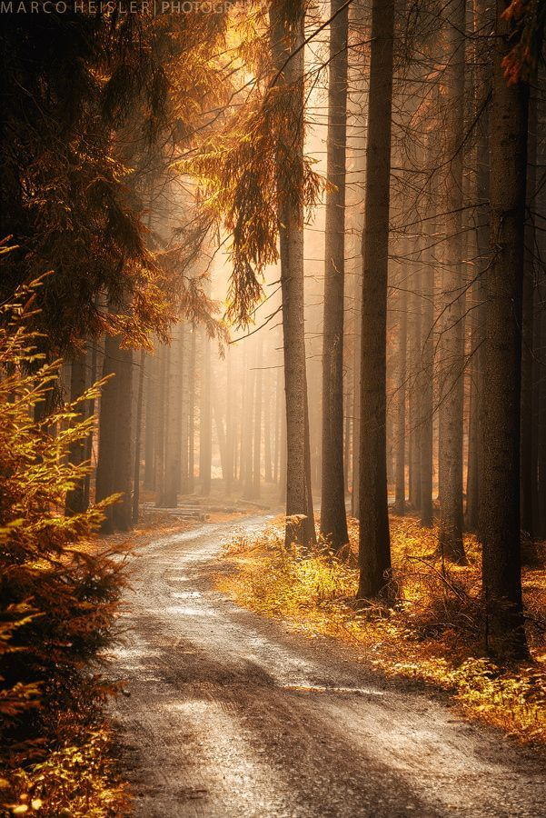 Golden Hues - A view back to autumn with a golden forest, by Marco