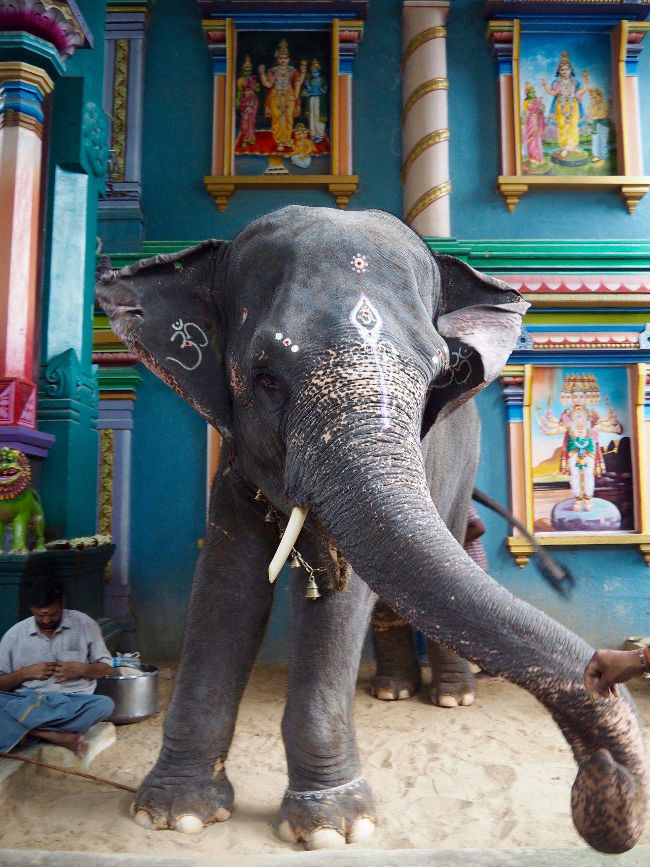 The Ultimate Pondicherry Travel Guide For India Top Things To Do In This Amazing Beach Town Met Afbeeldingen Rondreizen Reizen Bezienswaardigheden