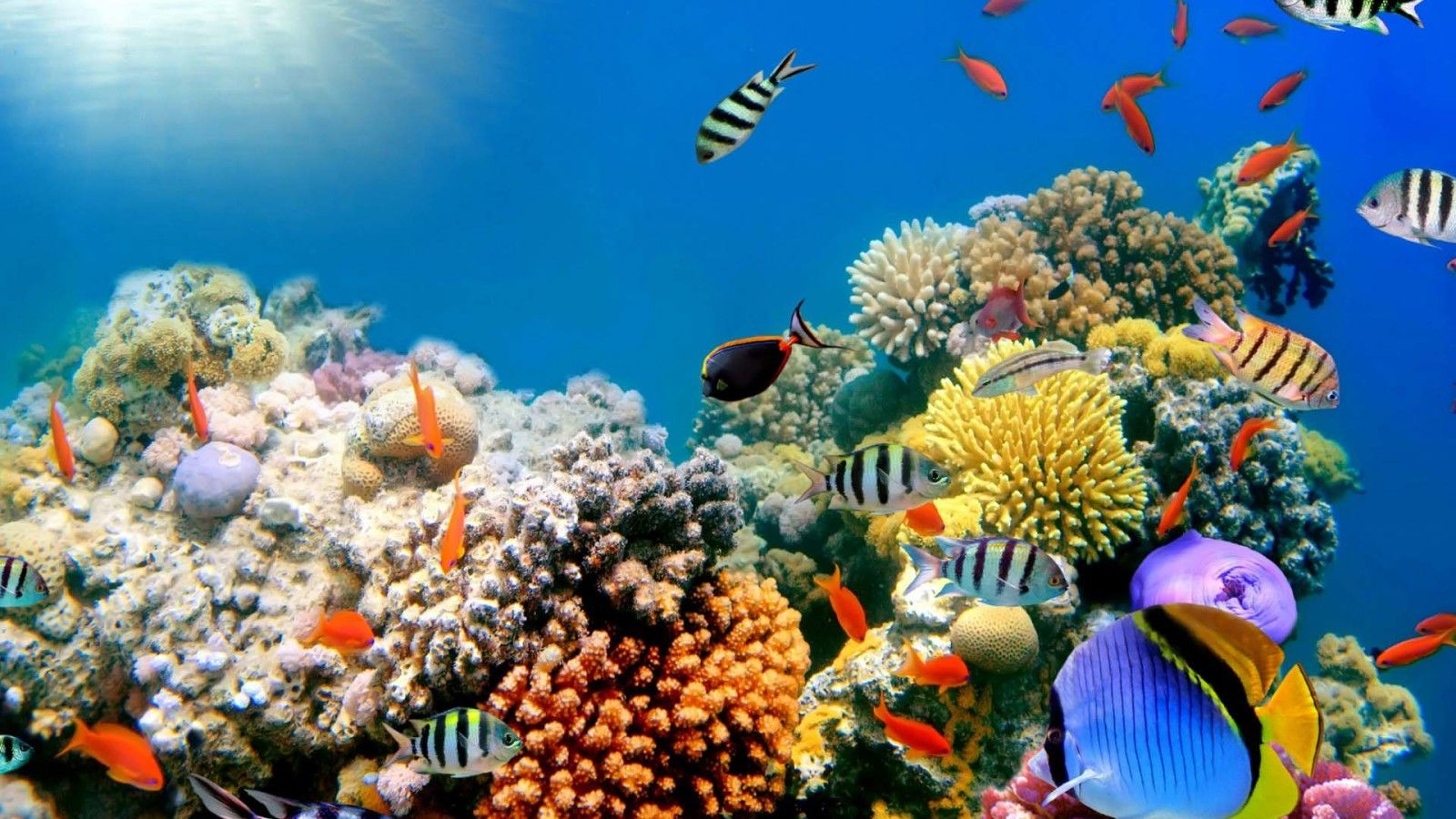 Coral Reef And Tropical Fish HD Desktop Wallpaper for K Ultra