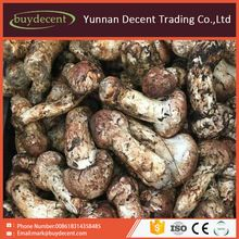 Yunnan Decent Trading Company Limited