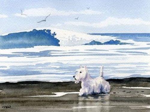 Scottish-Terrier-At-the-Beach-Dog-Art-Print-By-Artist-Dj-Rogers