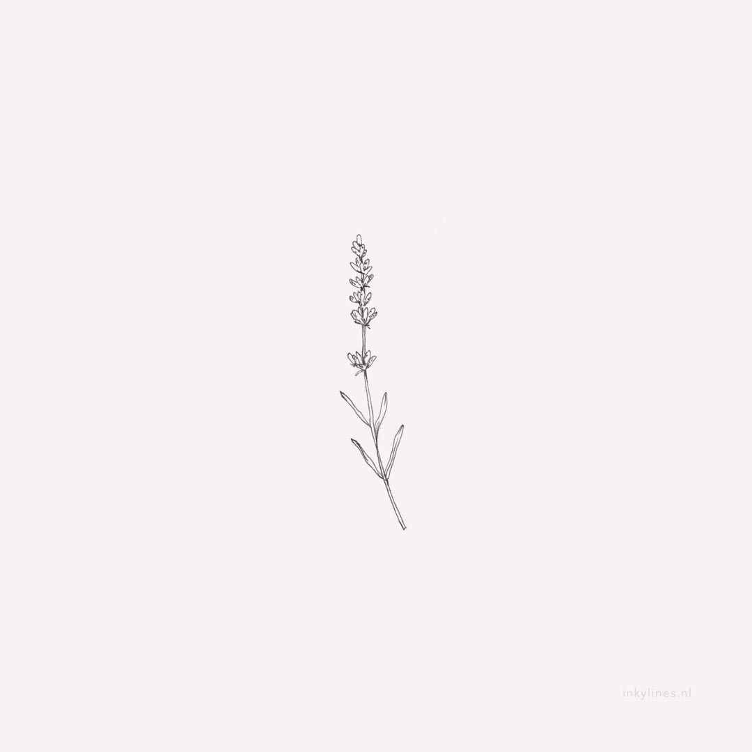 'Herb Sketches' Art Print by Emma Mildred Riggle | Herb ... |Lavender Tattoo Outline