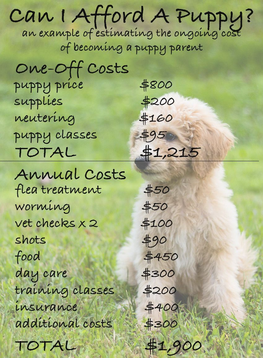 How Much Does A Dog Really Cost Dog Training Dog Training Obedience Dog Training Books