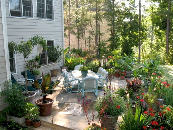 Hgtv 500 Error Page Tropical Garden Small Garden Design Patio Garden