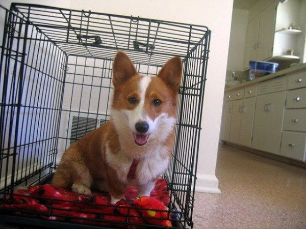 10 Lessons On Effectively Crate Training Adult Dog Crate Training