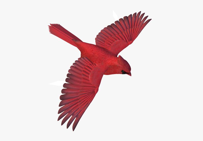 Flying Cardinal Bird Png Transparent Png Transparent Png Image Pngitem Cardinal Birds Bird Birds Flying