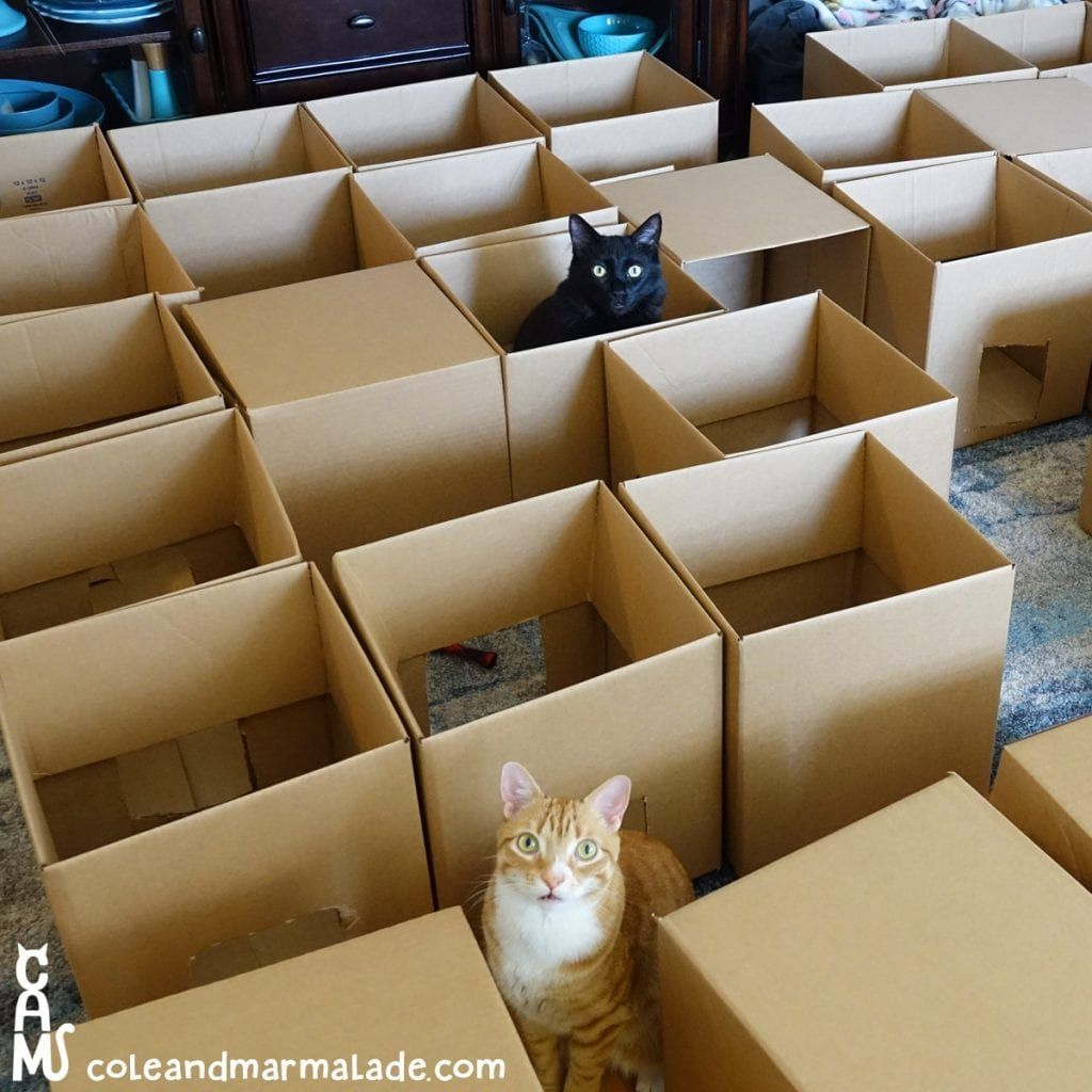 5 reasons why cats love cardboard boxes so much cat love