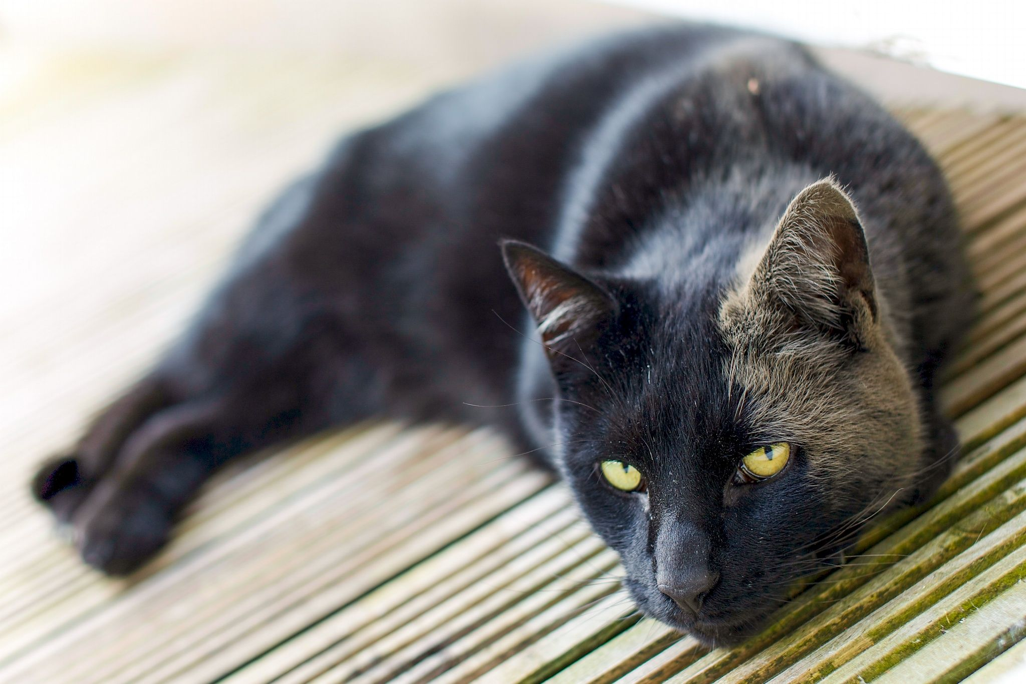 Dusty Cat by MAC Photography on 500px Cats, Wildlife