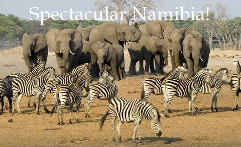 family friendly namibia tours www gateway africa comfamily friendly namibia tours www gateway africa com namibia tours safaris htm