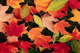 https://www.google.com/search?q=#fall foliage