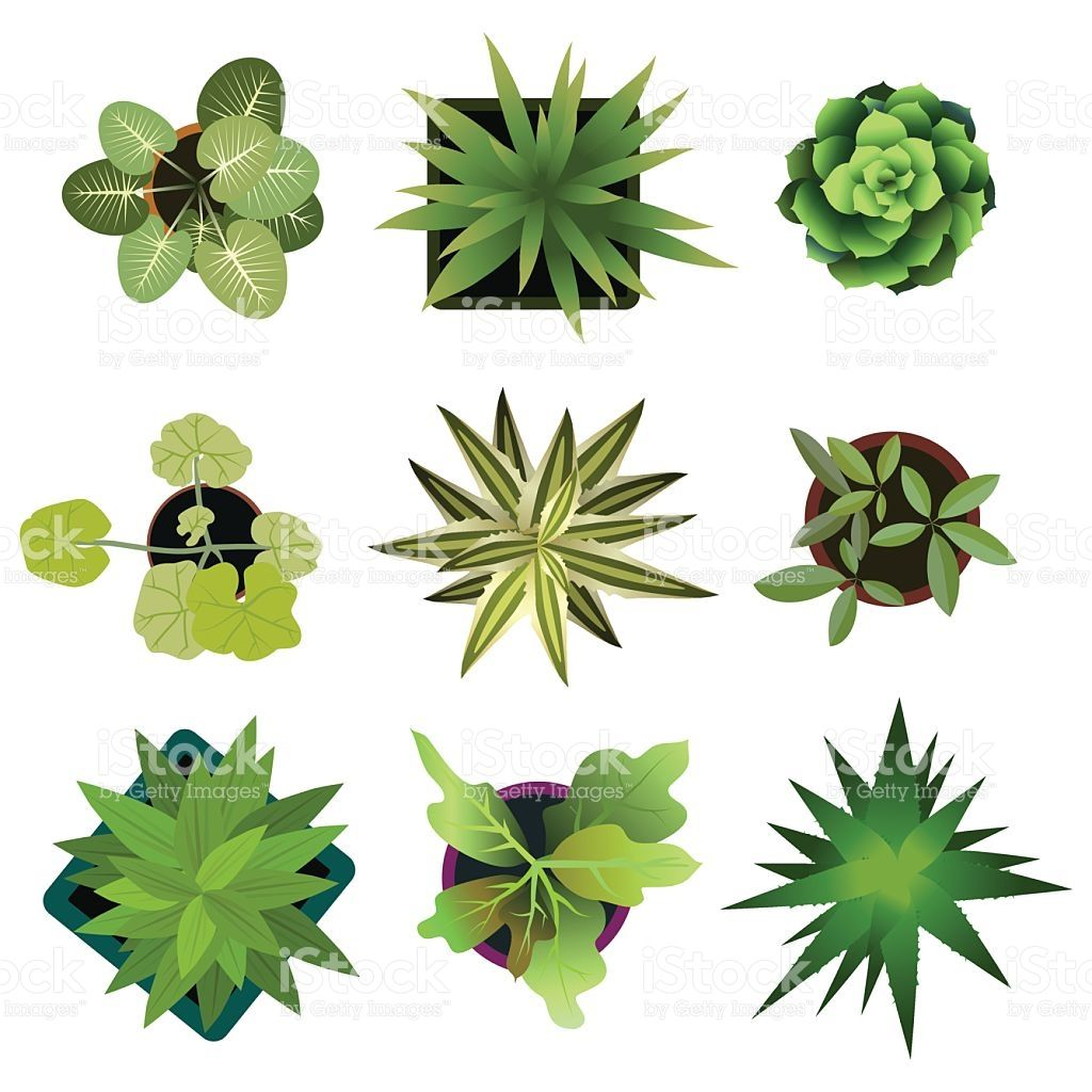 Top View Plants Easy Copy Paste In Your Landscape Design Projects Or Trees Top View Landscape Design Drawings Architectural Plants
