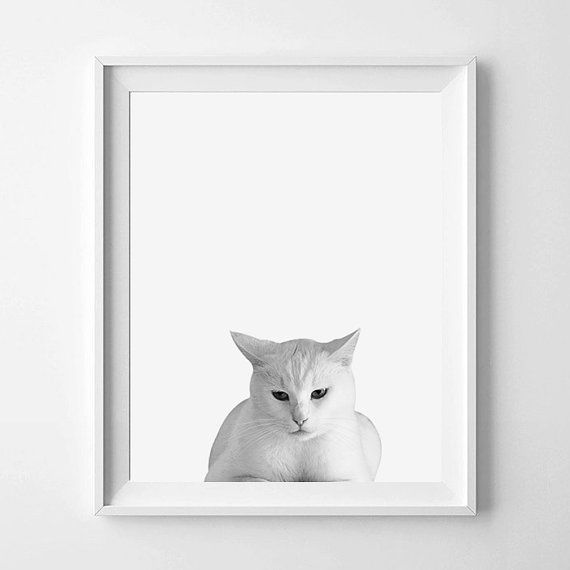 Cat Print Cat Photography Black And White by pinkbubblegumshop